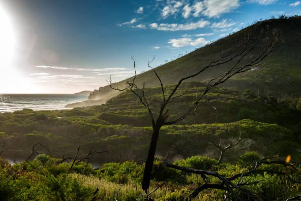 nationalpark wilsons promontory - own wilson stock-fotos und bilder