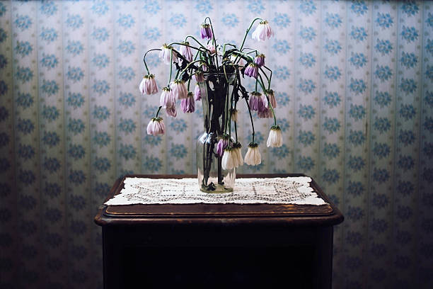 wilted flowers in vase with old wallpaper - dead plant stock photos and pictures
