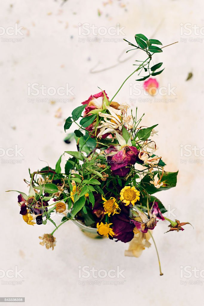 wilted flowers stock photo