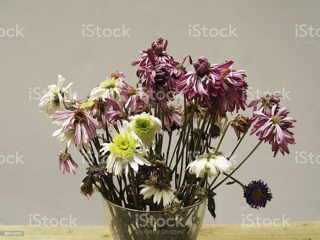 Wilted old flowers stock photo
