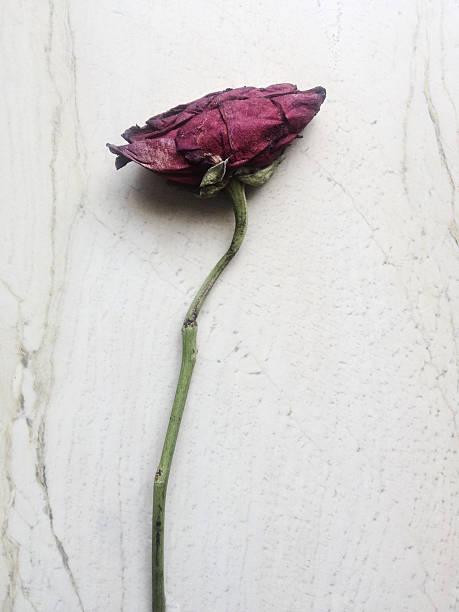 Refogado rose - foto de acervo