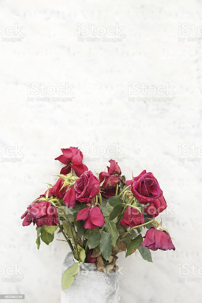 wilted roses royalty-free stock photo