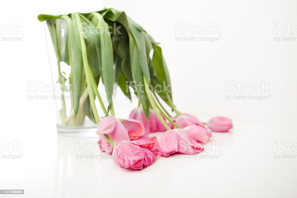 Wilted Tulip Bouquet in Clear Vase stock photo