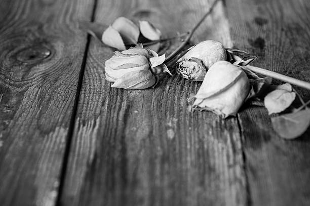 Wilted, withered roses on a wooden floor b&w stock photo