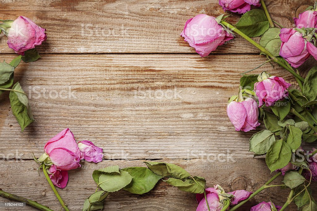 Wilted, withered roses on a wooden floor stock photo