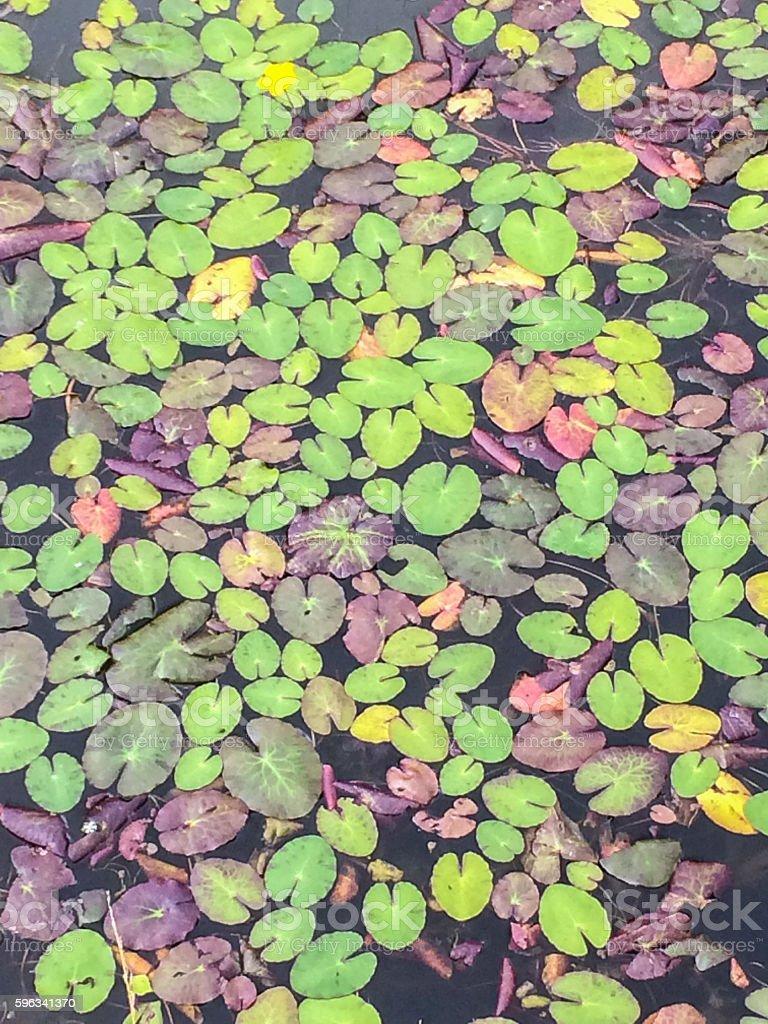 Wilts & Berks Canal Lizenzfreies stock-foto