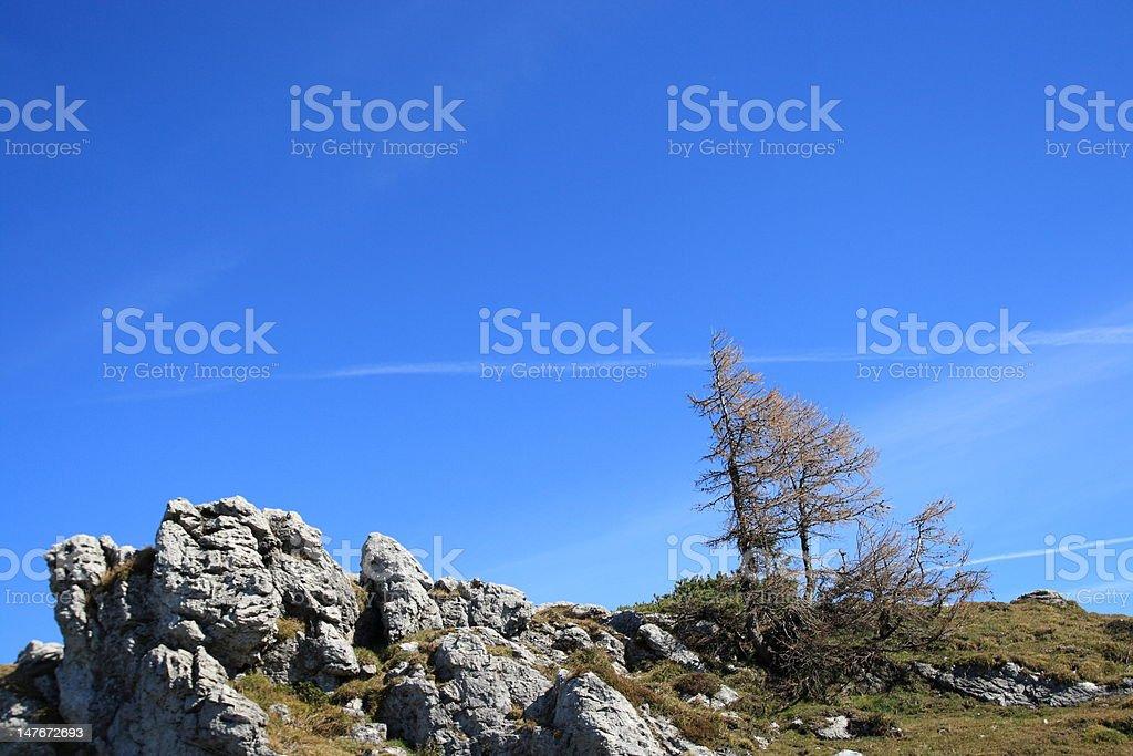 Wind blasted stock photo