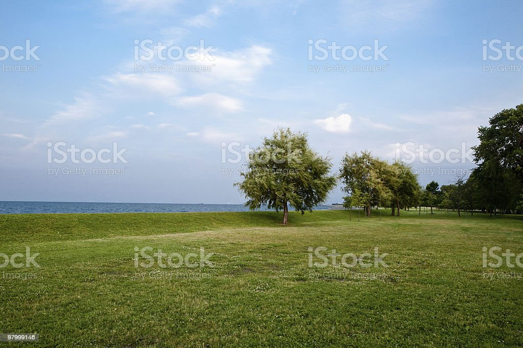 wind blown tree lake blue sky white clouds green grass royalty-free stock photo