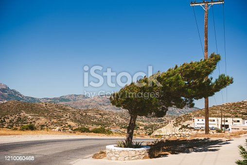 Wind Consequences with Pine tree bent on Karpathos
