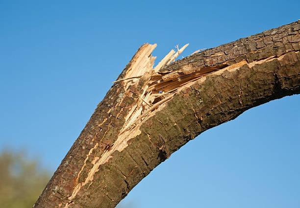 wind damaged branch stock photo