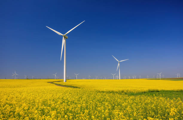 Wind farm and beautiful rapeseed flower in bloom with a clear blue sky. Lots of wind turbines in a field of blooming rapeseed stock photo