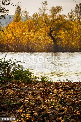 Wind making waves on river surface. Fallen leaves in the foreground, sunlight willow trees in background.