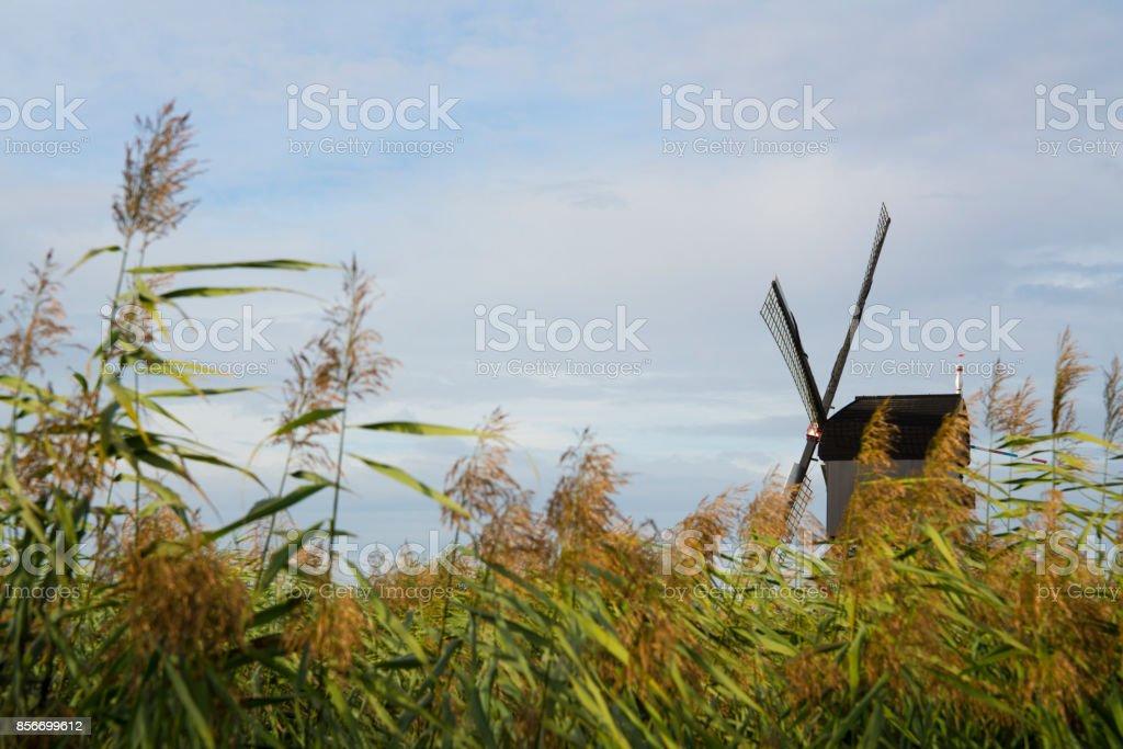 Wind mill in  Dutch water polder landscape, Kinderdijk, The Netherlands, against blue cloudy sky stock photo