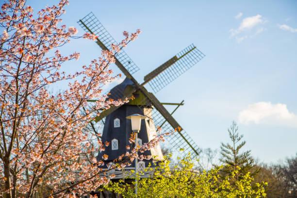 wind mill stående bakom en cherry blossom träd - malmö bildbanksfoton och bilder