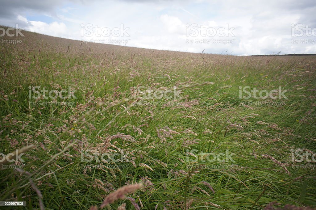 Wind on the Meadow stock photo