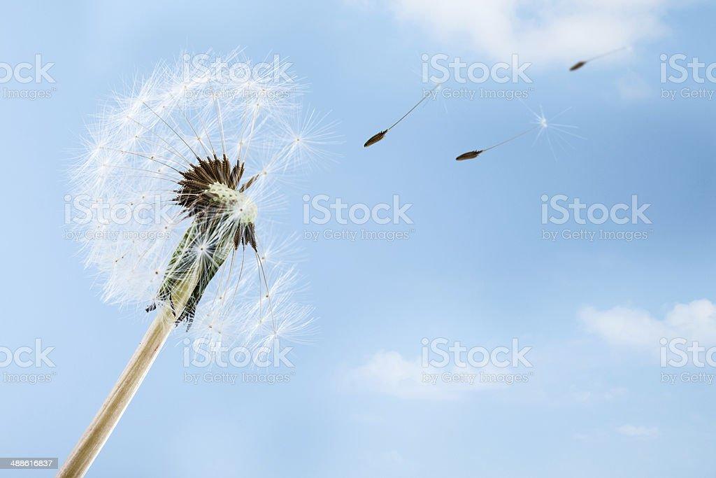 Le vent - Photo