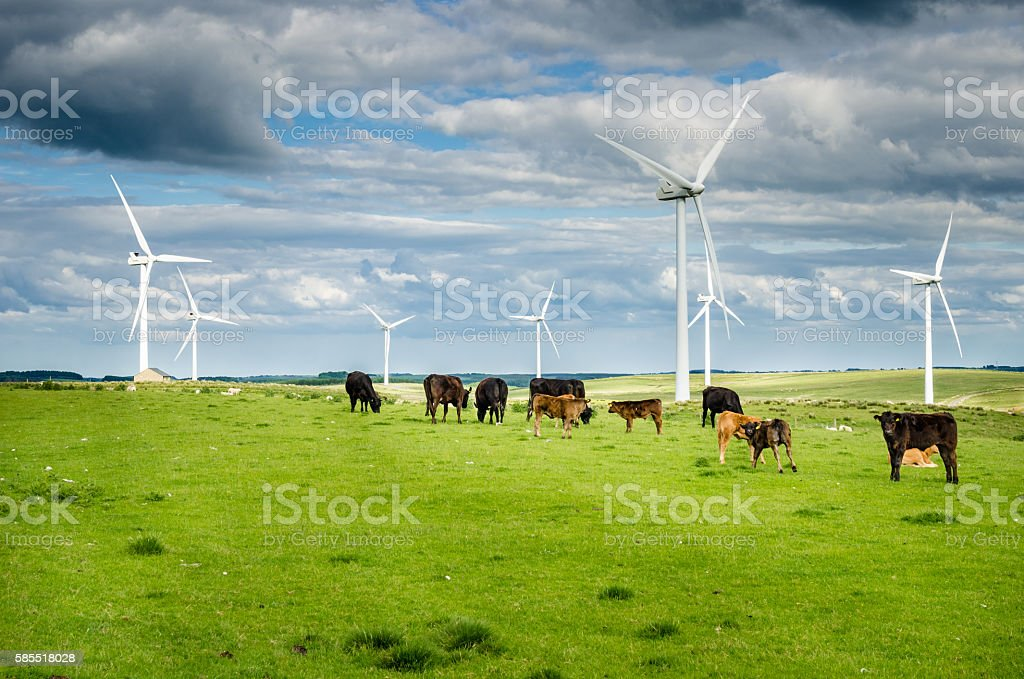 Wind Power Pland in a Grassy Field with Cows Grazing stock photo