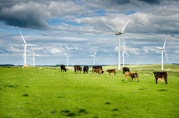 Wind Power Pland in a Grassy Field with Cows Grazing - foto de stock