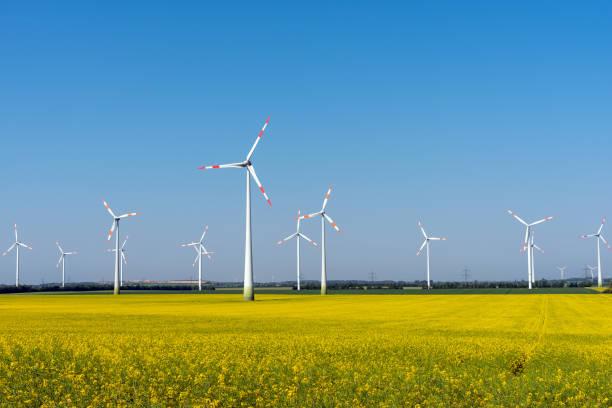 Windkraftanlagen in einem blühenden Raps Feld – Foto