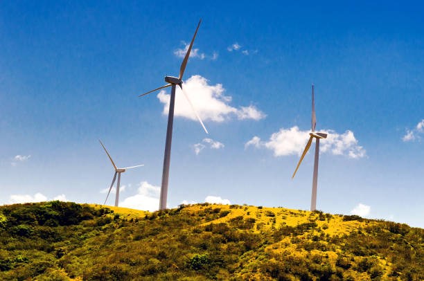 Wind power Pflanzen – Foto