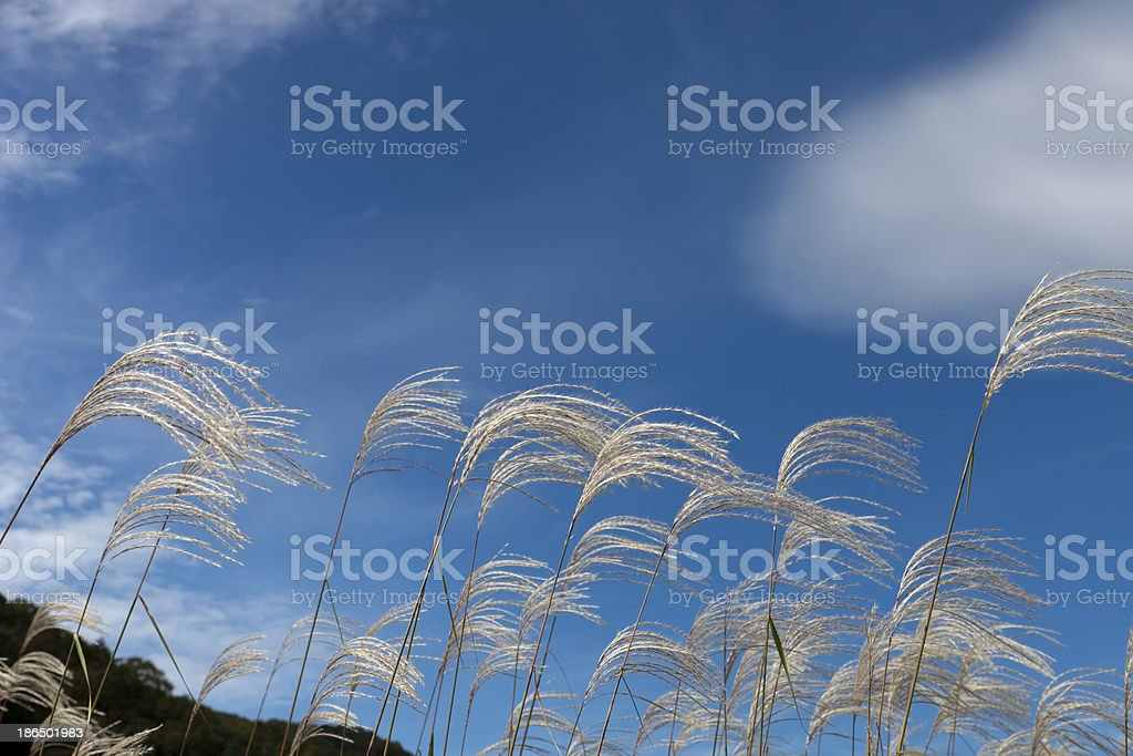 wind sky royalty-free stock photo
