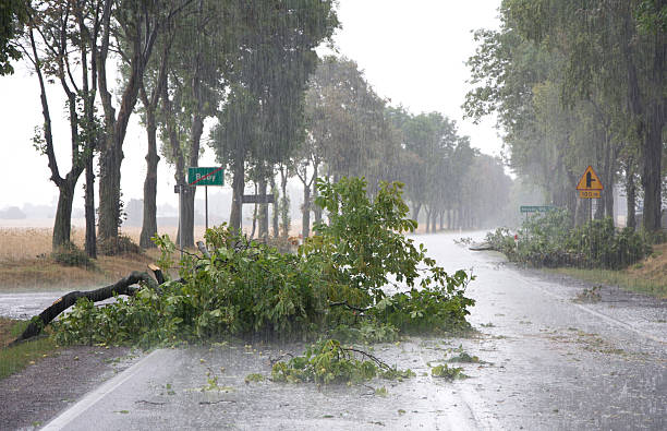 wind storm damage - extreme weather stock pictures, royalty-free photos & images