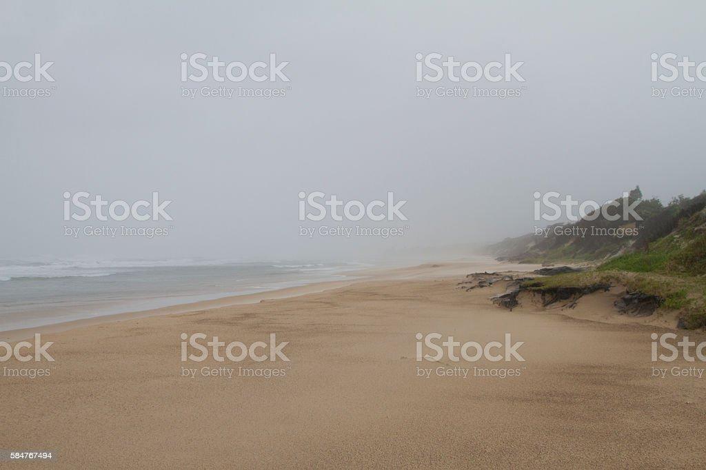 wind swept beach stock photo