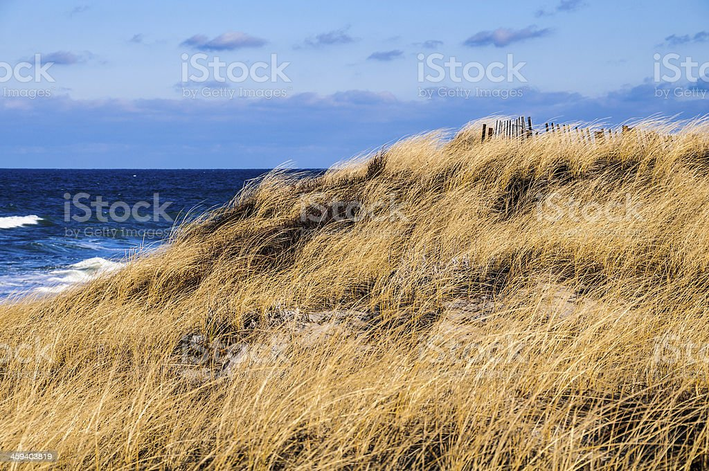Wind Swept Dunes royalty-free stock photo