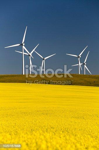Wind turbine power generation in canola field in bloom near Pincher Creek, Alberta, Canada.