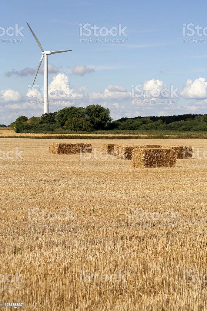 Wind Turbine and Wheat Field, Denmark royalty-free stock photo