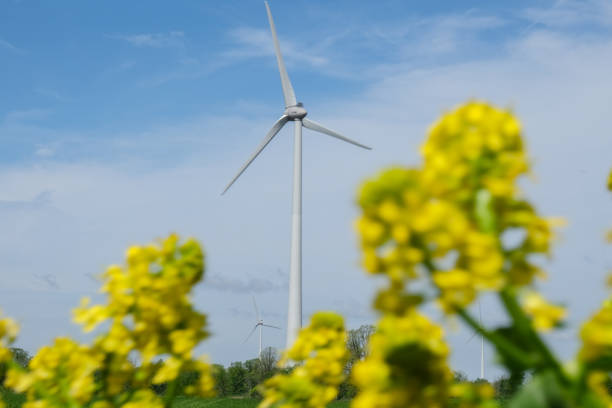 wind turbine between flowers stock photo