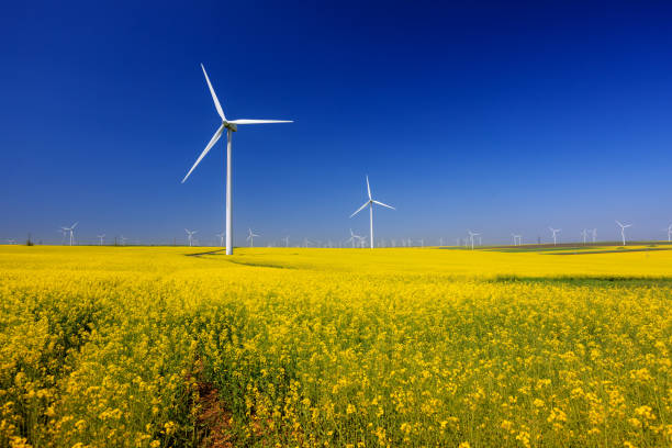 Wind turbine in a yellow flower field of rapeseed stock photo