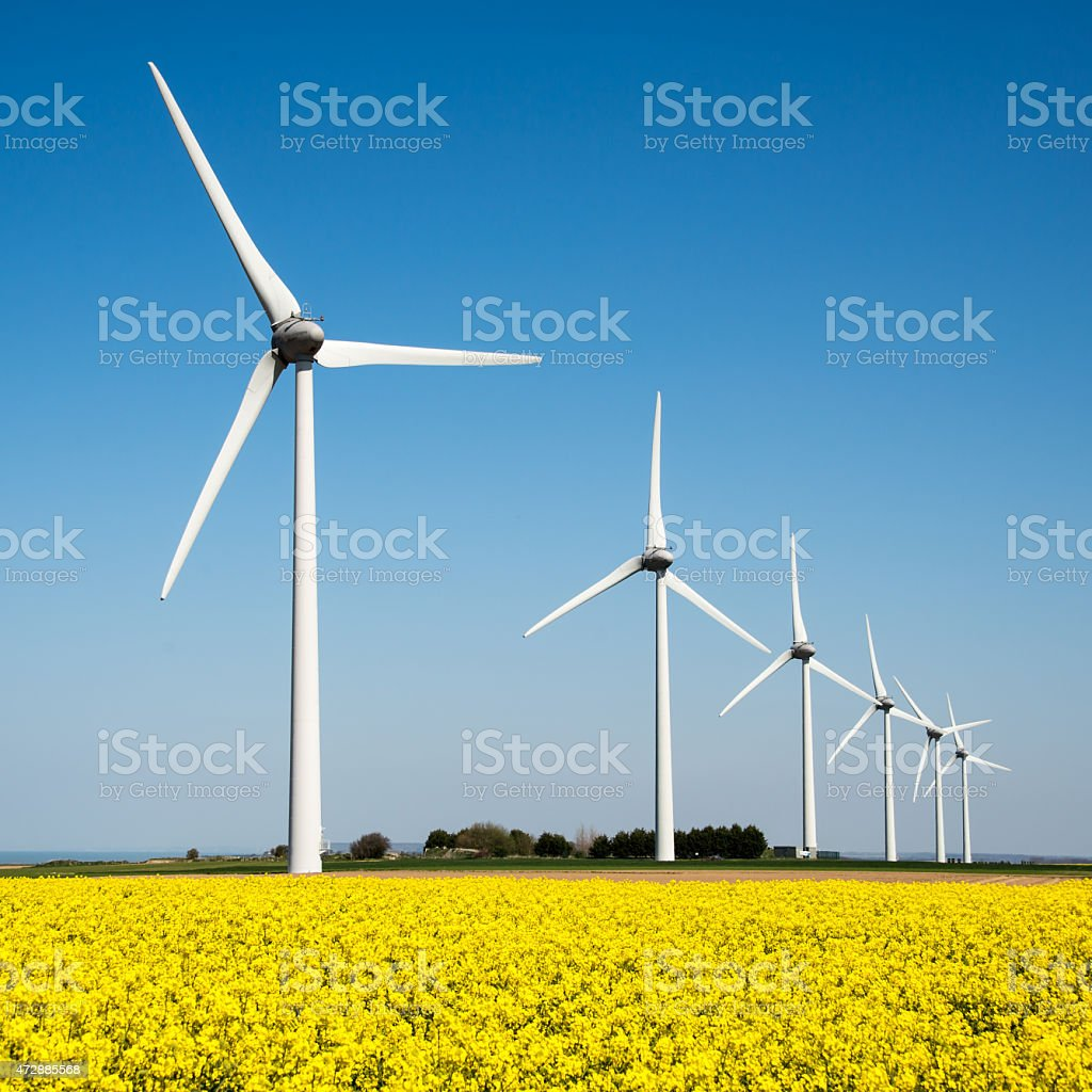 Wind turbine in a yellow flower field of rapeseed stock photo