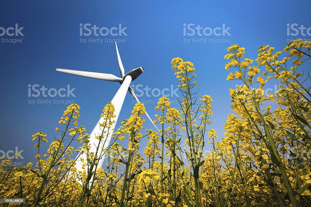 wind turbine in rapeseed field royalty-free stock photo