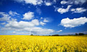 Wind turbine in canola field over blue sky