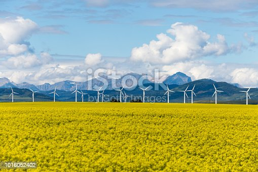 Wind turbine renewable energy power generation in canola field near Pincher Creek, Alberta, Canada.