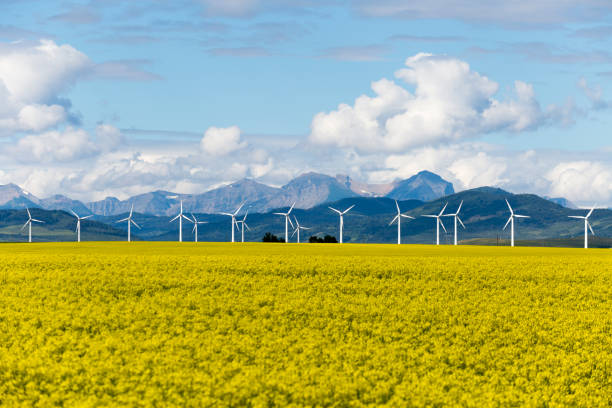 Wind Turbine Renewable Energy Wind turbine renewable energy power generation in canola field near Pincher Creek, Alberta, Canada. alberta stock pictures, royalty-free photos & images