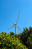Close up of a wind turbine view from below and olive tree