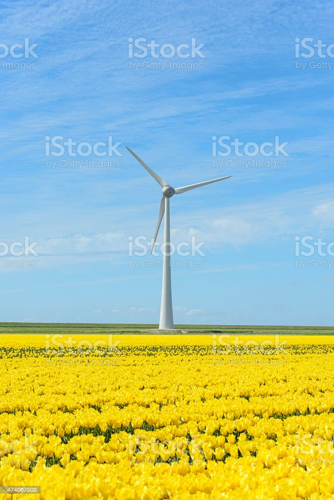 Wind turbine with Tulip flowers stock photo