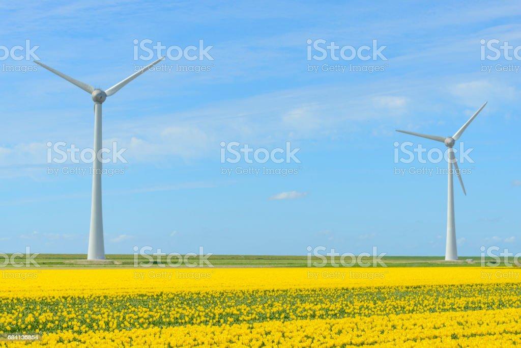Wind turbine with Tulip flowers zbiór zdjęć royalty-free