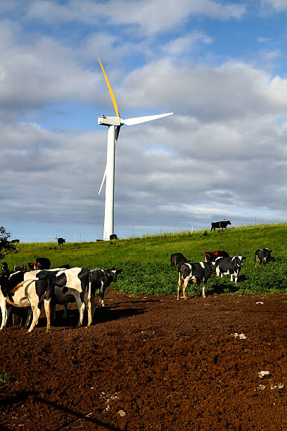 Wind turbine-clean energy Renewable, clean energy being generated by a wind turbine in a field of cows. neicebird stock pictures, royalty-free photos & images
