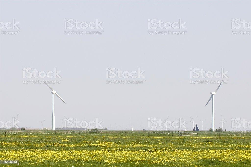 Wind Turbines & Dandelions in a Dutch Landscape royalty free stockfoto