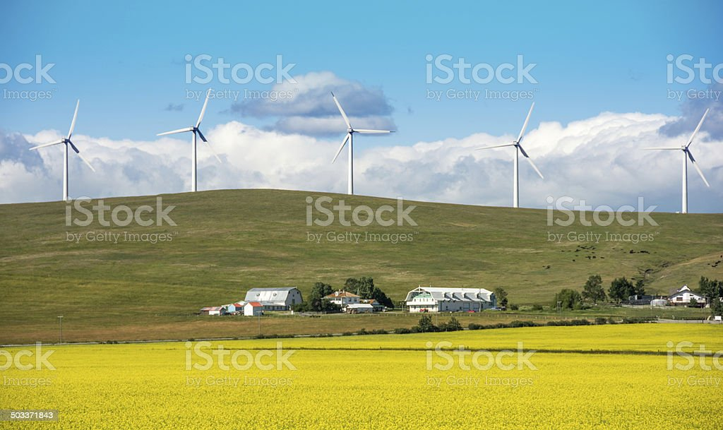 Wind Turbines and Canola stock photo