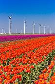 Wind turbines and orange tulips in Noordoostpolder, Holland