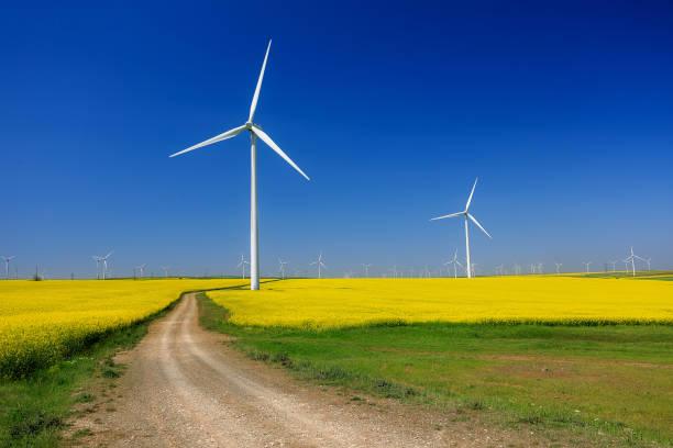 Wind turbines and Rapeseed field in bloom in Dobrogea, Romania stock photo