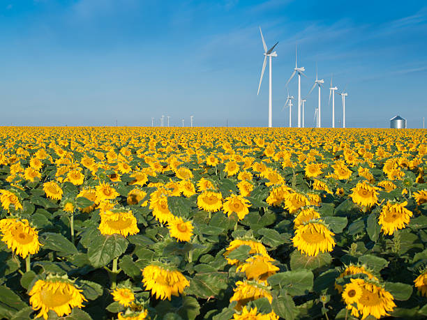 Wind turbines and sunflowers Wind turbines over a beautiful sunflowers field in Limon, Colorado. limoen stock pictures, royalty-free photos & images