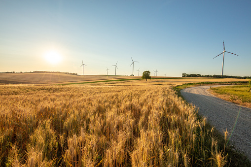 Countryside landscape with a wheat field and wind turbines under a clear blue sunny sky.