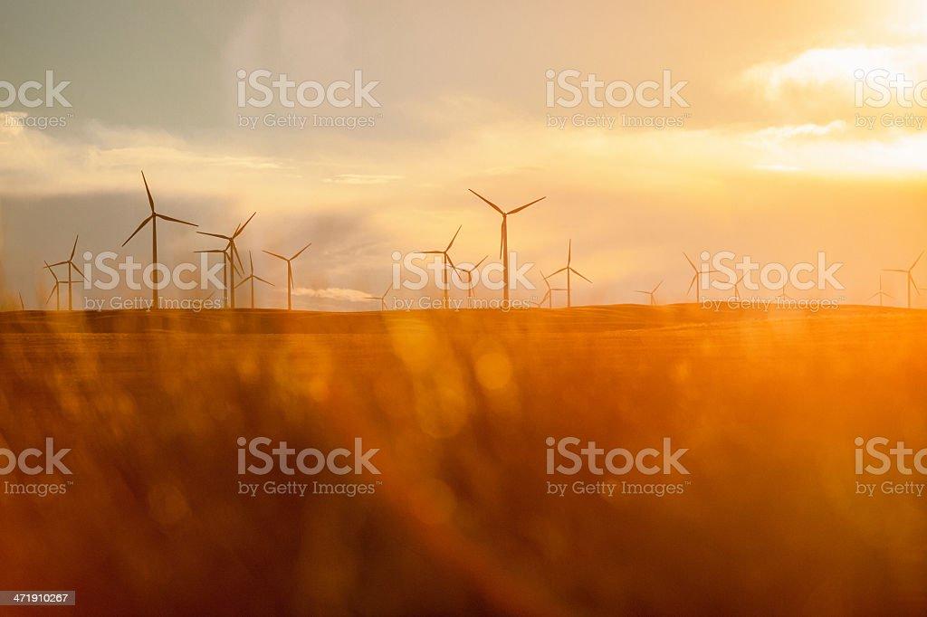 Wind Turbines at Sunset in Montana stock photo