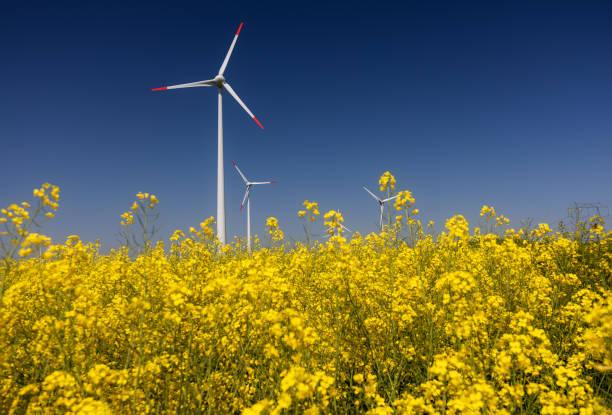 Wind turbines. Fields with windmills. Rapeseed field in bloom in Dobrogea, Romania stock photo