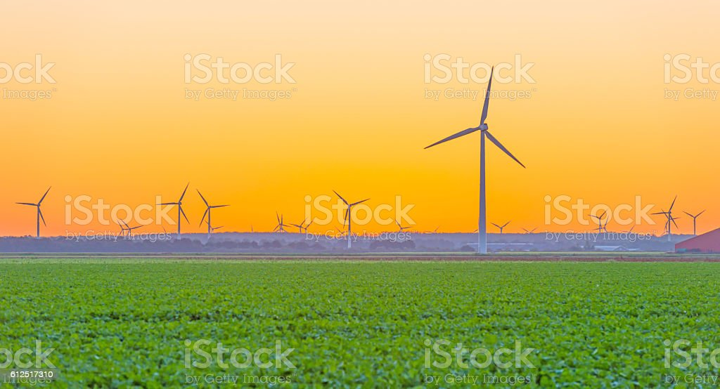 Wind turbines in a field in at sunrise stock photo